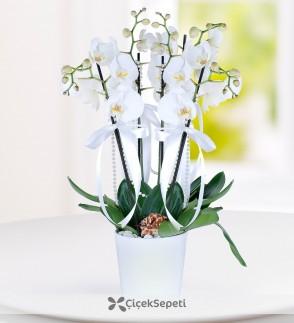 Orkide Çiçeği - Thumbnail